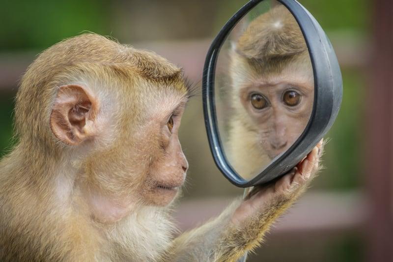 monkey-3512996_1920